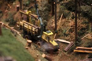 Holz auf der Spur 009